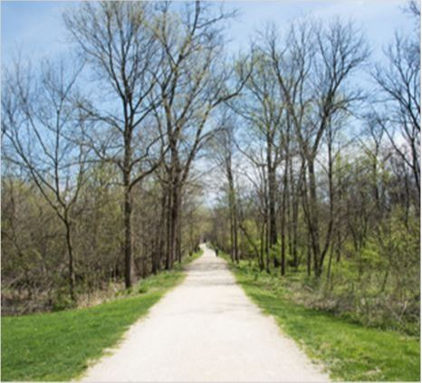 White path through the native forest at the McDowell Grove nature preserve in IL