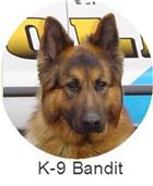 K9 Bandit_resized.jpg
