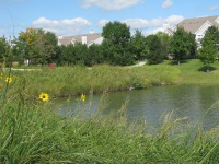 Natural Landscaping, Best Practice Detention Pond, at Cantera